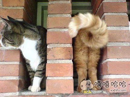 黄猫进去,黑猫出