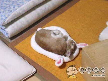温馨的床。。。