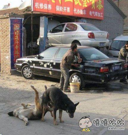 狗狗很专业啊