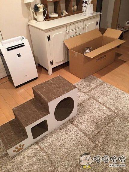 一位主人省吃俭用,为家里的猫咪买下了一大箱玩具,好让猫咪钻个痛快……结