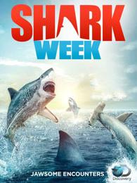 鯊魚周2016
