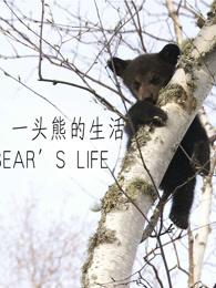 莉莉 一头熊的生活